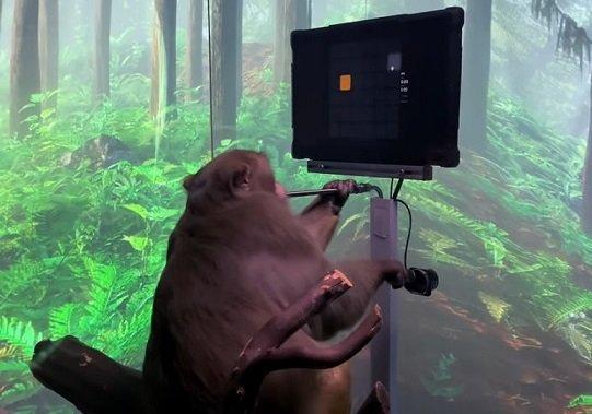 Инженеры стартапа Маска научили примата управлять игрой силой мысли