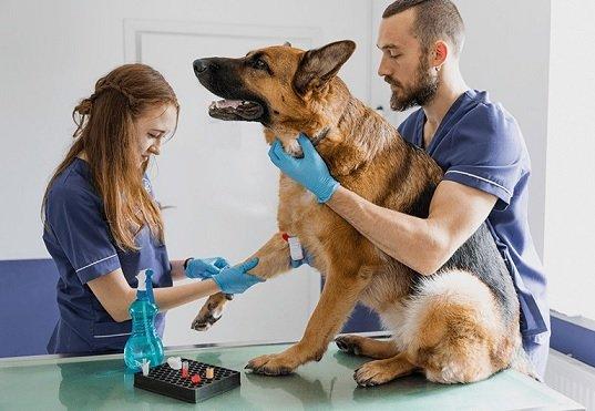 Mars начала оказывать в России ветеринарные услуги